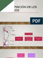 Formación de los plexos.pptx