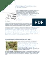 Organizacion Politica de la Republica RomanaENTREGAR FORMATO.docx