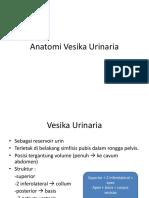 Anatomi Vesika Urinaria SP dr.anung.pptx