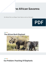 saving the african savanna