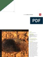 FAUNA_PELIGRO.pdf