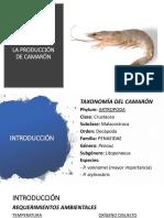 PROTECCIÓN ANIMAL - Camarón.pptx