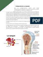FORMACIÓN DE LA SANGRE.docx