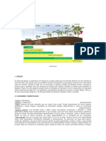 fenologia tomateDoc1.docx