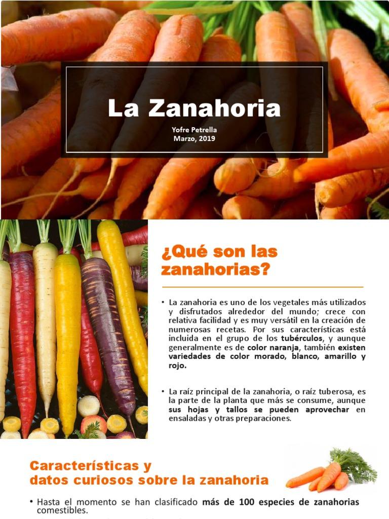 La Zanahoria Yofre Petrella Marzo 2019 Antioxidante Vitamina A Subespecie sativus, la zanahoria, pertenece a la familia de las umbelíferas, también denominadas apiáceas. zanahoria yofre petrella marzo 2019