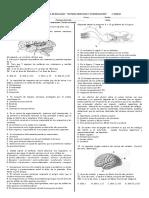 prueba sistema nervioso 2do medio 2.docx