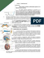 TALLER embrio respuestas.docx