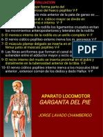 Anatomia Tobi. Pie