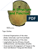 5-Stem Primary and Secondary Growth.ppt