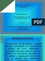 Presentacion Paula Villegas