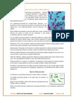 CELULAS PROCARIOTAS Y EUCARIOTAS.docx