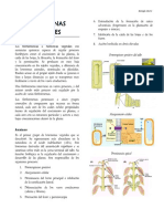 20 HORMONAS VEGETALES.pdf