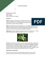 CULTIVO DE LIMÓN.docx