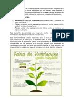 FERTILIZACION.docx