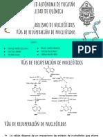 ADA 8 Metabolismo de nucleotidos