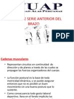 cadenas musculares.pptx