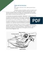 Cronología dentária de los bovinos.docx