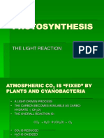 PHOTOSYNTHESIS.ppt