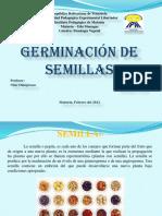 Semilla y germinacion.pptx