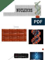 Ácidos-nucleicos