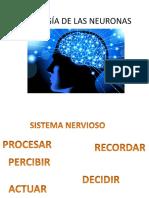 Fisiología de Las Neuronas