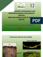 Aislameinto y multiplicacion de micorrizas, su interaccion con bacterias beneficas y su multiplicacion artesanal (Presentación PowerPoint)