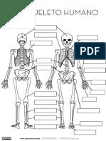 Esqueleto