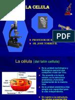 Celula Estructura y Funcion