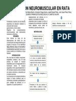 Preparacion-neuromuscular.docx