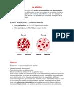LA ANEMIA informacion.docx