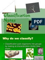Classification Taxonomy Powerpoint