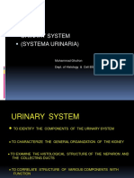 Urinary System 25 Feb 2013