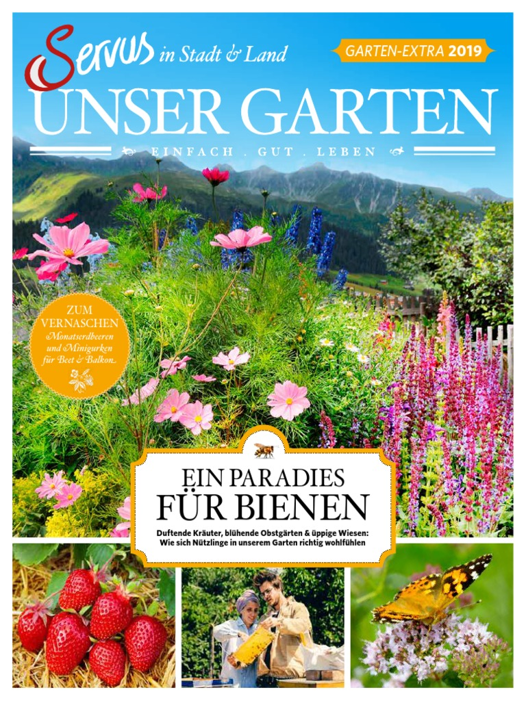 Wild Staude Nachtkerze Oenothera biennis gelb Gärtnerei Lichtnelke Pflanzen Vers