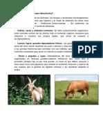 Qué comen los animales Heterótrofos.docx