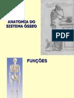 Sistema Ósseo - 2013-2