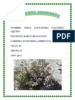 INFORME VIAJE PALOMINO AQUINO SOFIA.docx