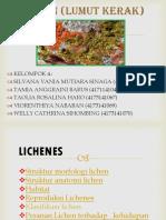 Ppt Lichen