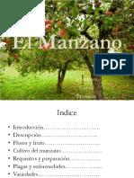 El Manzano.pptx
