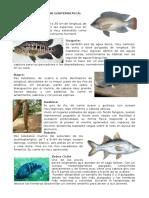 ANIMALES DE LA FAUNA GUATEMALTECA.docx
