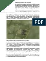 Manejo Integrado de Araña Roja en Hortalizas Bajo Invernadero.docx