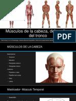 Músculos de la cabeza, del cuello y.pptx