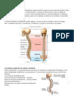 Aula 03 - Osteologia Da Coluna Vertebral