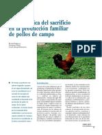 Problemática del sacrificio en la producción familiar de pollos de campo.pdf