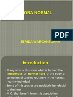 Flora Normal, Pathogenesis of Bacterial Infection