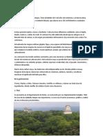 Sobre los Mayas.docx