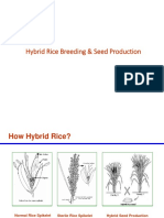 A1764846802_12964_21_2018_Hybrid Rice Breeding (1)