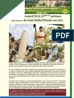 Liberación cultivar maíz ICTA B-15 ACP+Zn