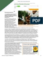 Enfoques_ Iniciativa Mundial de Fitomejoramiento