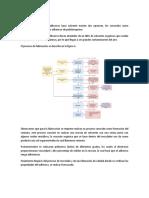 Descripción del proceso y distribucion de la planta.docx