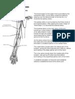 Arterial & Venous Trees